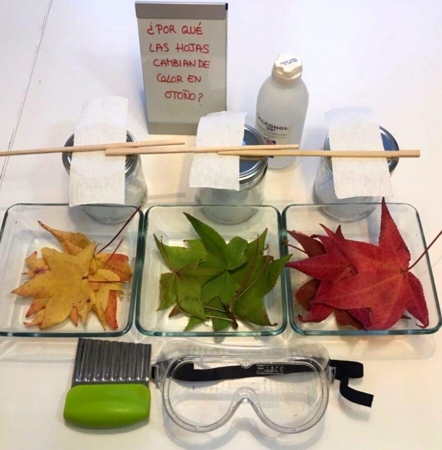 Por qu las hojas cambian de color en oto o inspirados for Arboles que no se le caen las hojas en invierno